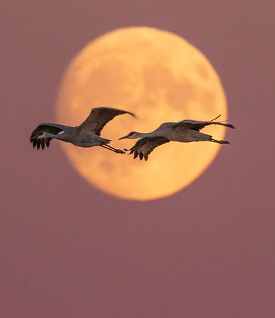 Waterfowl, shorebirds, gulls, egrets, cranes, herons...