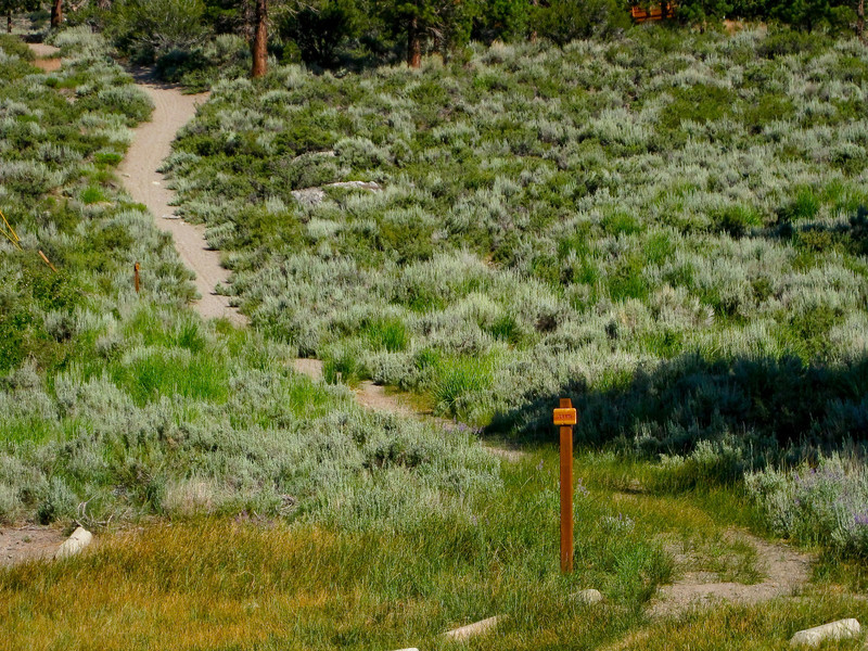 Trail around Gull Lake, north side. See map Blue line