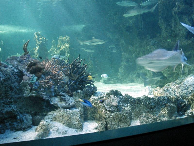 60.  Sydney Aquarium.JPG