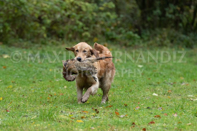 Dogs-4700.jpg