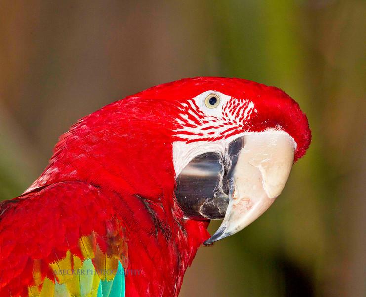 Red Bird.jpg