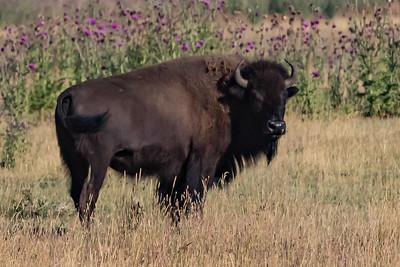 Wyoming AUG2017