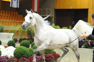Stallions 8-10 years
