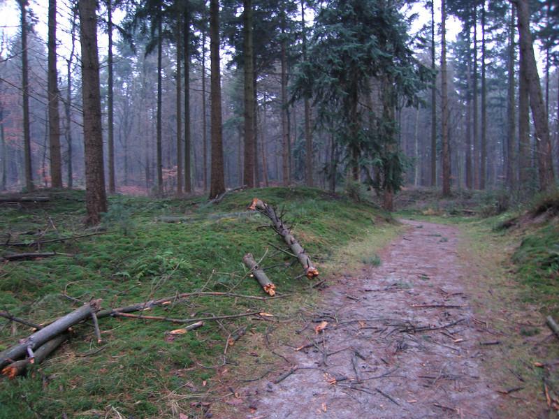 Er op uit wandeling Zandenbos 12 km