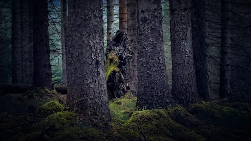 Forest Shadows-121.jpg