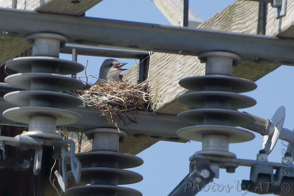 Birding 2020 June