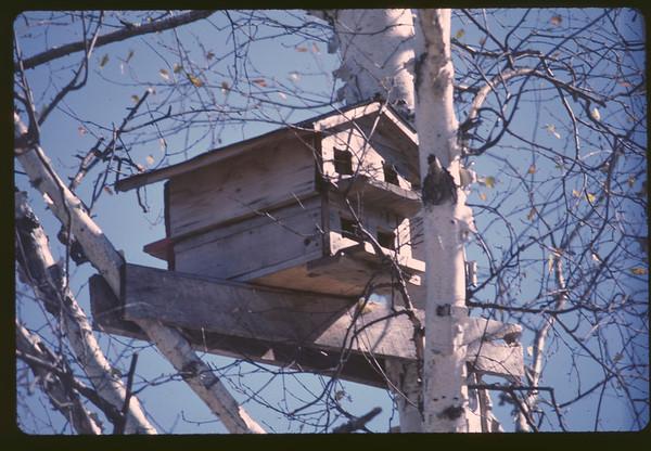 "1975-Oct: ""TU"" Homestead, NE-MN Superior Nat'l Forest Location"