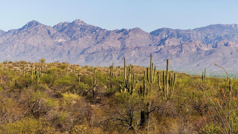 Cactus and Catalina
