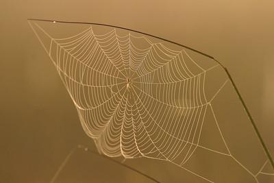 Sunrise Spider Webs