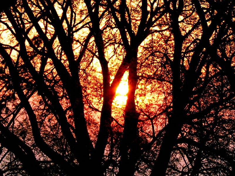 Copy (2) of outlook_morning_tree.jpg