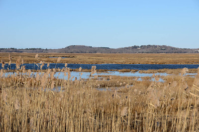 Parker River Wildlife Refuge 1-29-12