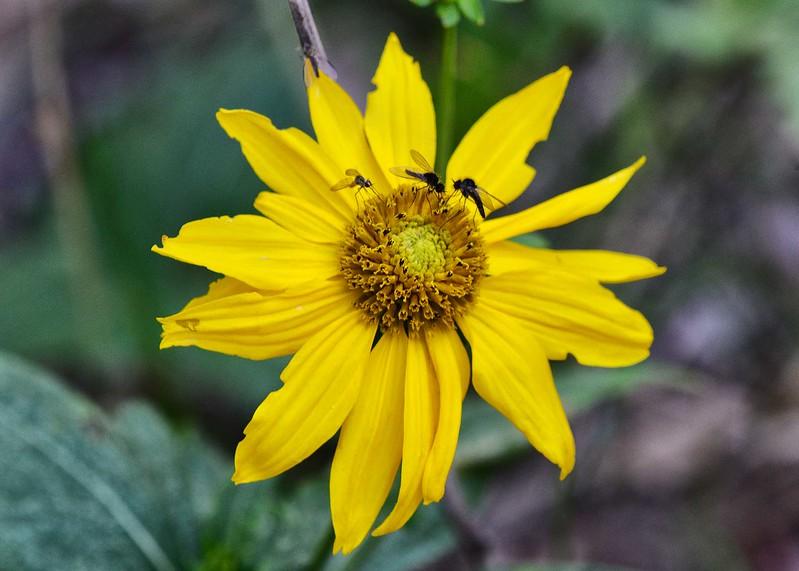 NEA_5528-7x5-Flower.jpg