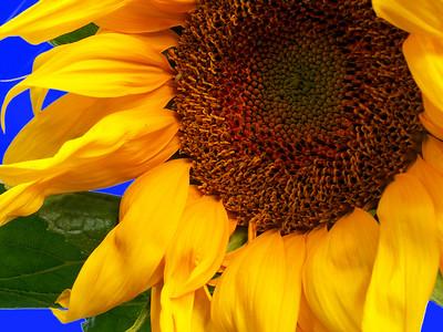 Flowers Various
