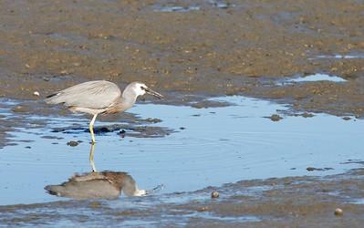 Birds at the Estuary Oct 09