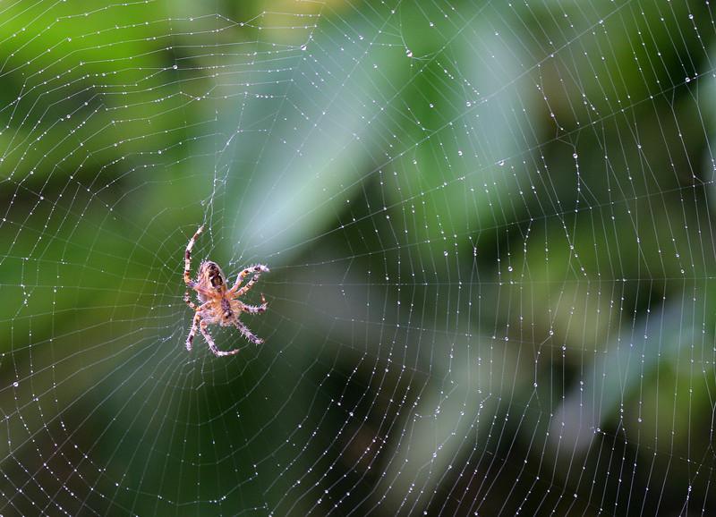 5870 Spider on Web.jpg