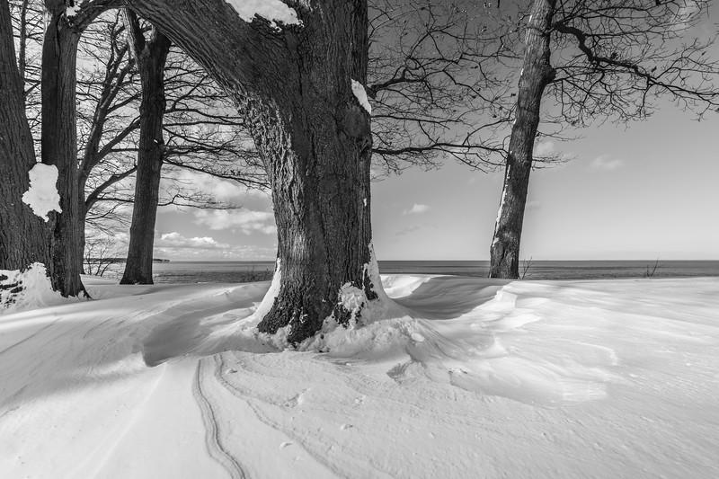Winter scenes-1.jpg