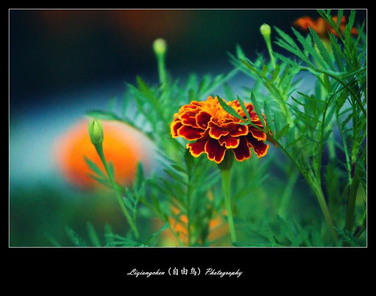 IMG_3307-L.jpg