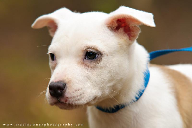 61 - Puppy