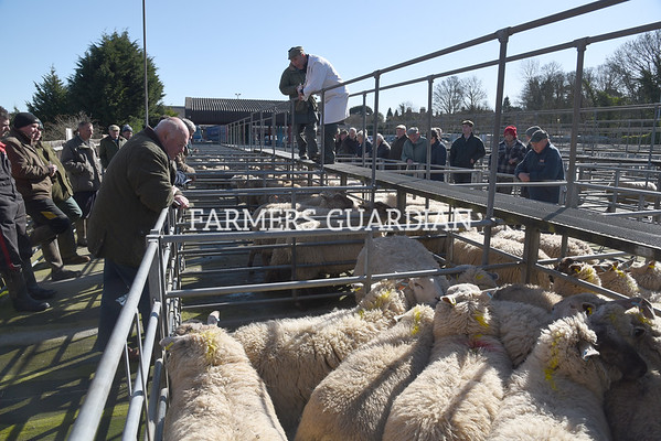 Louth store cattle & sheep April 2018