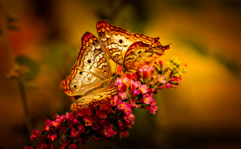 Butterfly-129.jpg