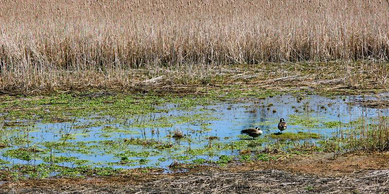 20100410_lake_to_lake_trail_004.jpg