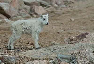 Wildlife of Colorado