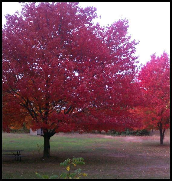 fall (14).jpg