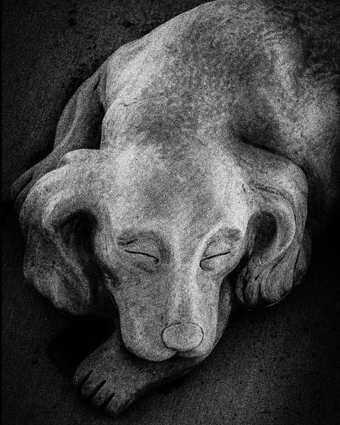 Concrete Dog.jpg