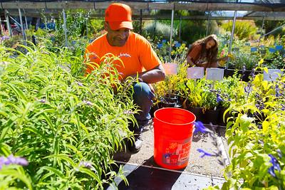 Fall Plant Sale at Mendocino College