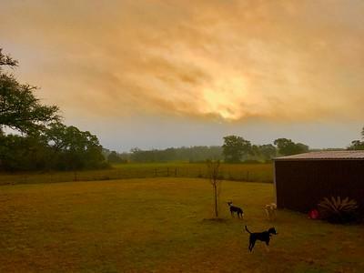 Hallettsville Ranch (Happy Tails Acres)