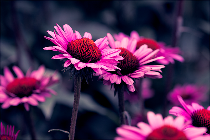 20120713_Flower_03.png
