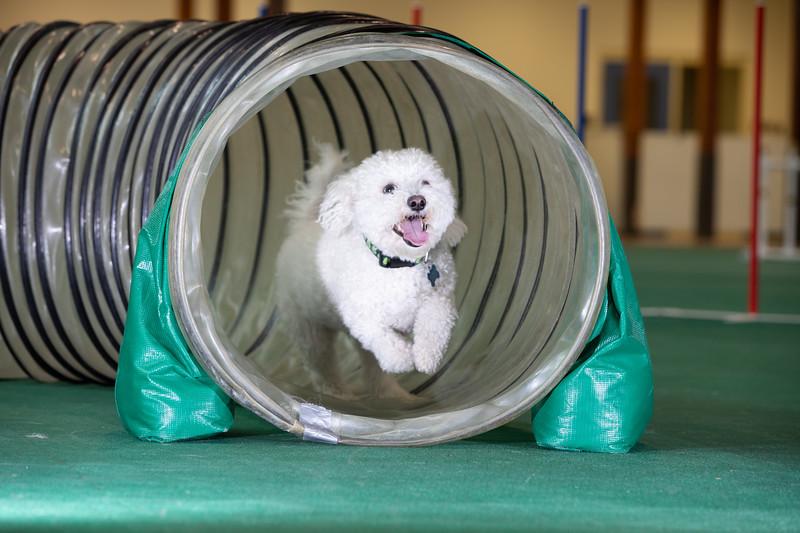 SPCA_Agility-64.jpg