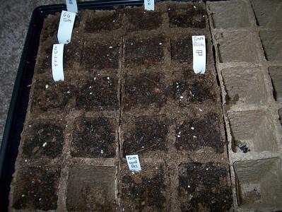 Growing Vegetables: 2007