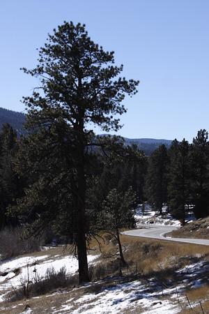 New Mexico 2006