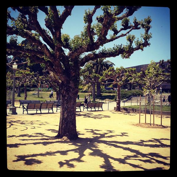 Lovely day at Golden Gate Park