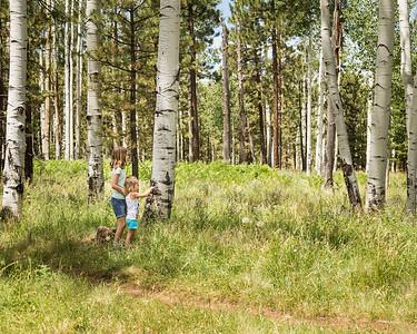 Arizona Trail-Ferns