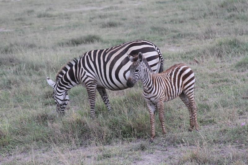 Kenya 2019 #2 1516.JPG