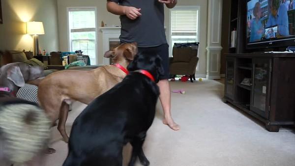Bella Training Video