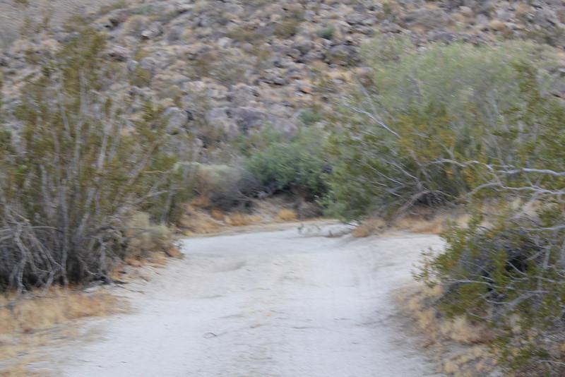 05 Cougar Canyon (197).JPG