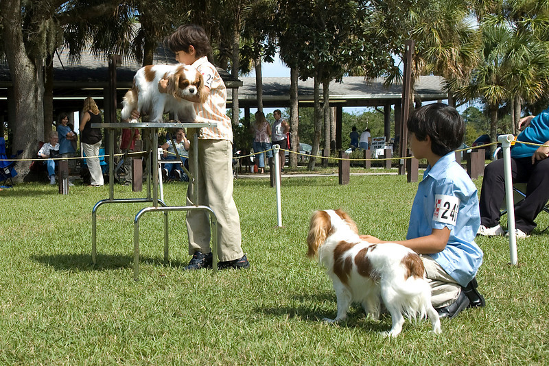 These two brothers and their Cavalier King Charles Spaniels compete during the Junior Showmanship competition.