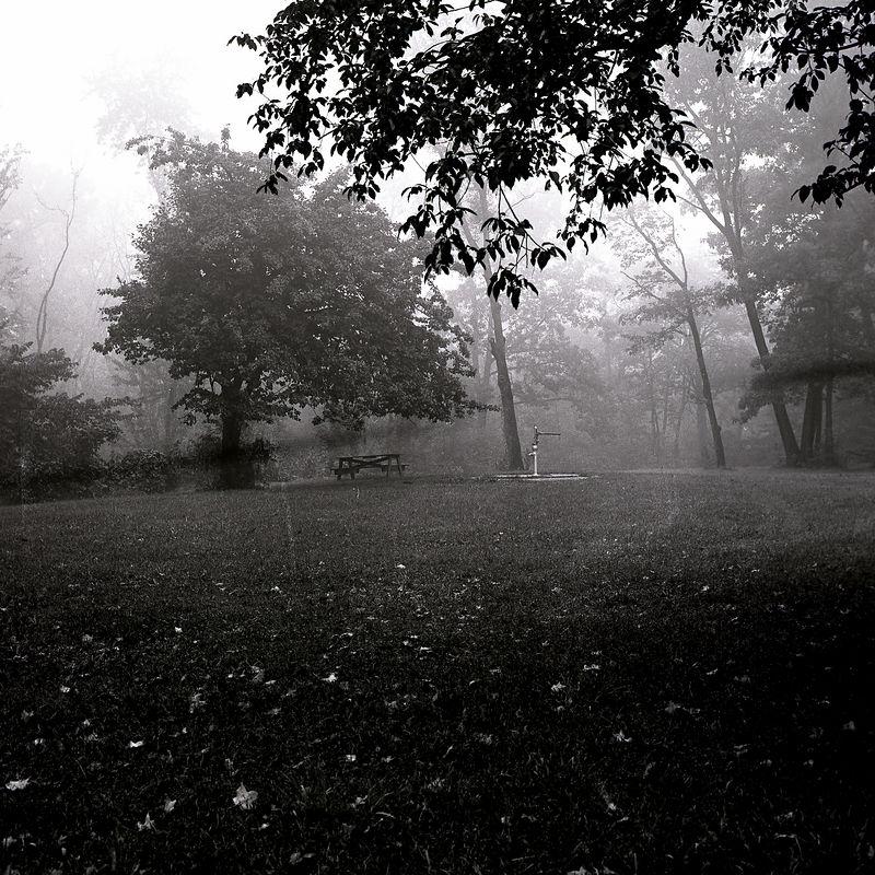 Fog forest preserve.jpg