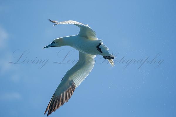 Birds - Marine