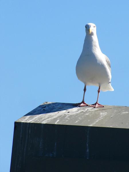 Feathered observer - 4965.jpg
