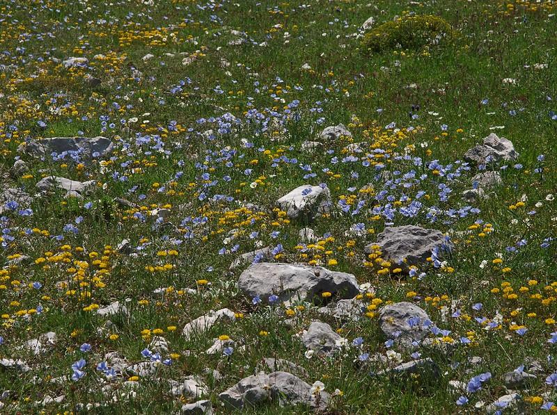 Monte Sant'Angelo 28-04-10 (177).jpg