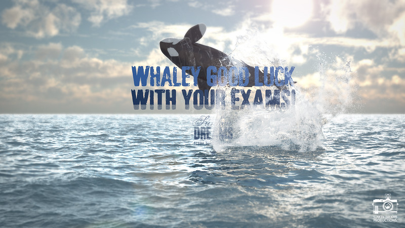 Whaley Good Luck for your Exams!