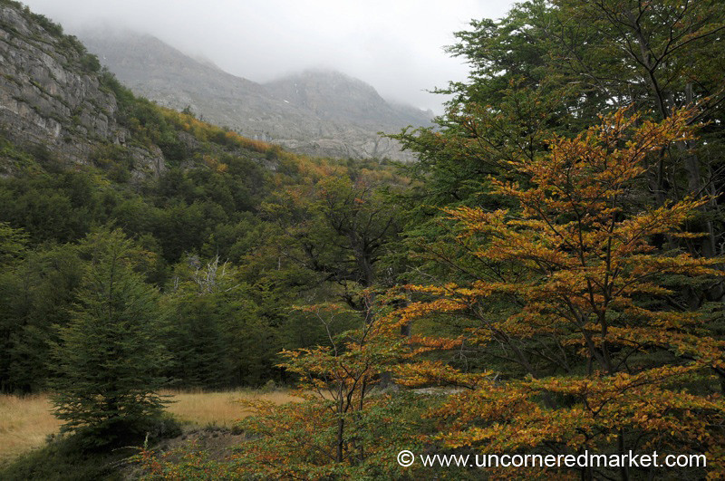 Autumn Foliage at Torres del Paine National Park, Chile