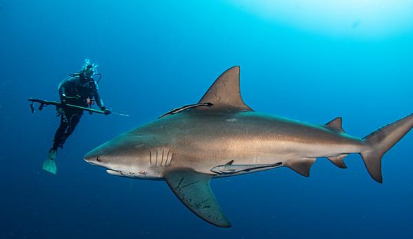 Shark Stewards Art Gallery