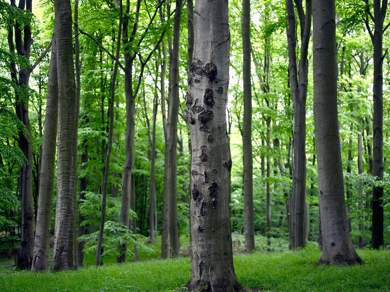 Wald - High Resolution Wallpaper