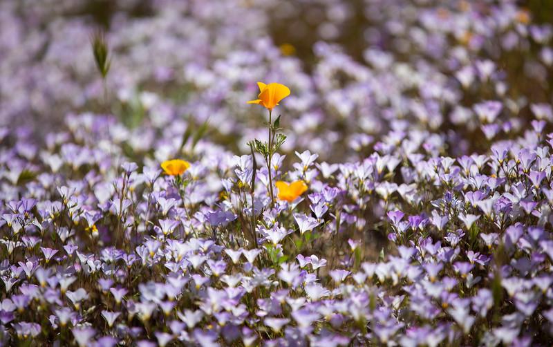 Spring Flowers B-225.jpg