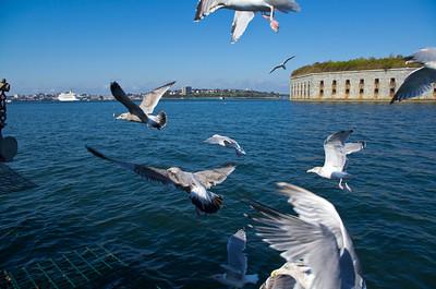 Seagulls on Casco Bay, waiting for bait